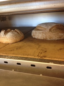 My sprouted wheat flour sourdough bread, loaded with sprouted grits, about halfway through the bake.