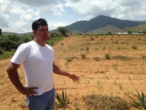 Eduardo Angeles in his agave field.