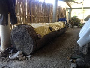 "A wooden log ""fermenter"""