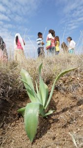 Planting Agave for Earth Day
